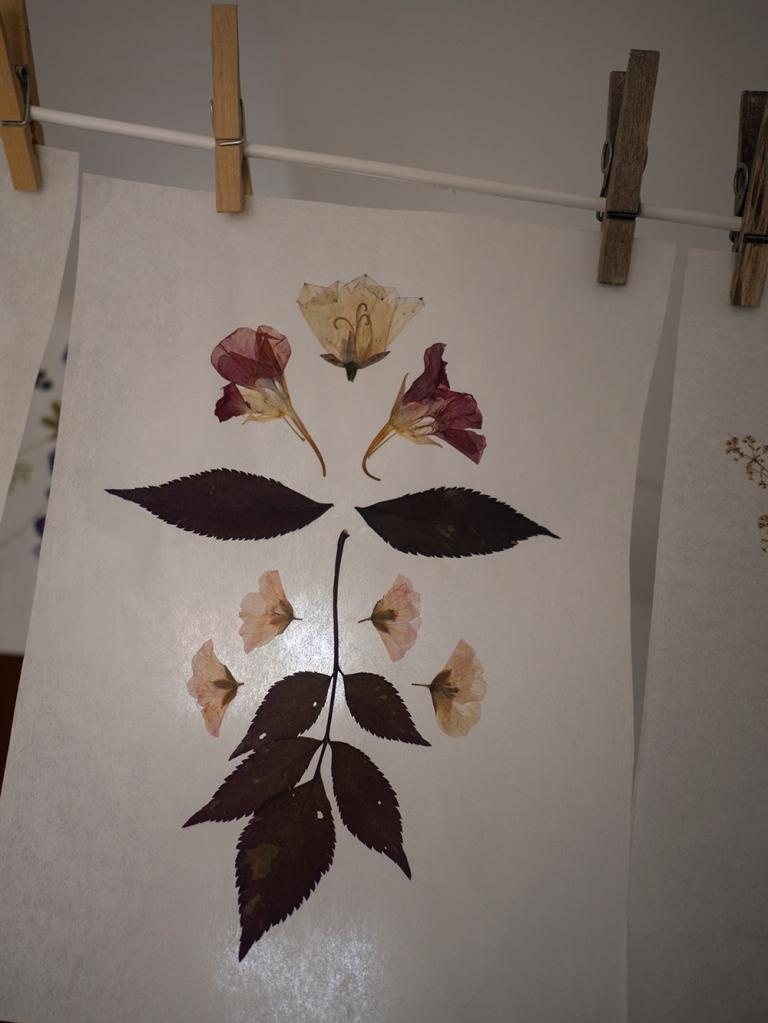 växtcollage1